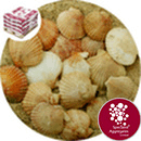 Sea Shells - Natural Queenie Scallop